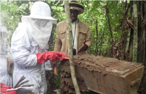 l'apiculteur doit s'assurer de la sécurité et du confort de ses abeilles!